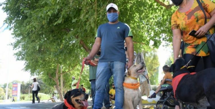 Las 17 razas de perros considerados peligrosos: los dueños deben tramitar un permiso para ternerlos | El Diario 24