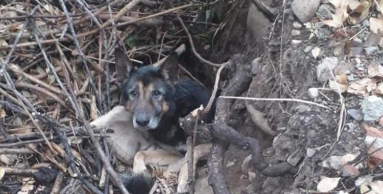 Crueldad absoluta: Jóvenes hallaron en un pozo a un perro que había sido enterrado vivo   El Diario 24