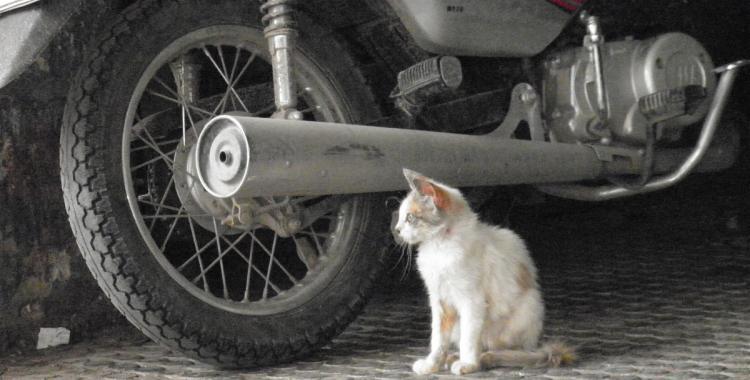Si el gatito fuera más grande, nos devora | El Diario 24