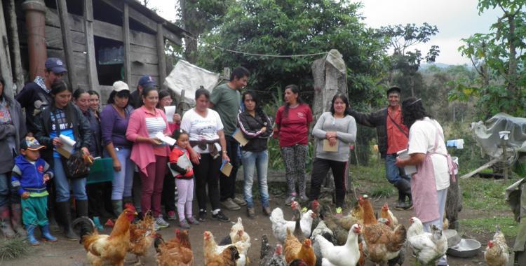 Sopita de gallina para la compostura, santo remedio   El Diario 24