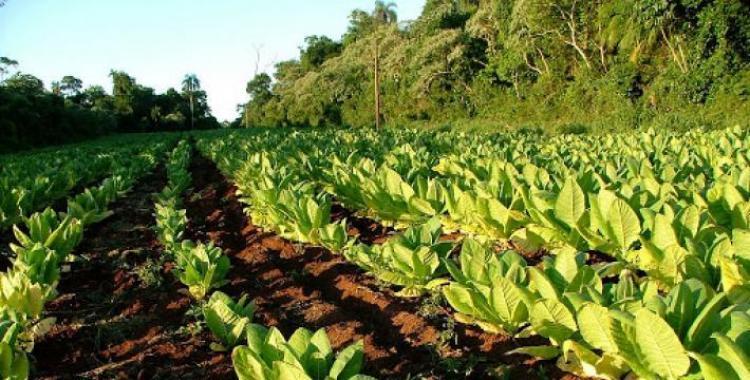 Cronograma de pago del Fondo Especial del Tabaco | El Diario 24