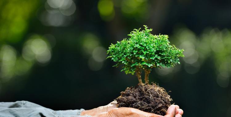 Por qué el 27 de septiembre es el Dia de la Conciencia Ambiental | El Diario 24