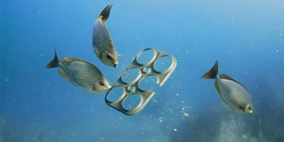 Para evitar que los peces mueran una cervecera cre un for Estanques plasticos para peces