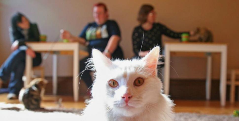 ¿Por qué darle un beso a tu gato puede provocarte la muerte?