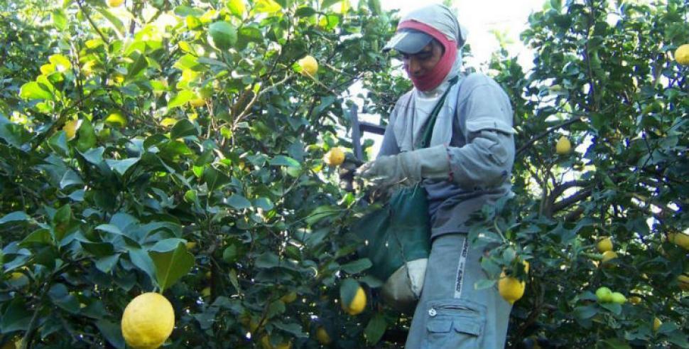 Brasil reabre su mercado a los limones tucumanos