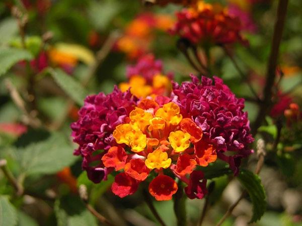 El jard n de infantes querubines conmemora el d a de la for Jardin querubines